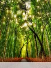Bamboo forest wallpaper for LG Optimus Vu Global
