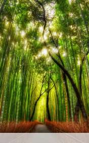 Bamboo forest wallpaper for Lenovo IdeaTab S6000