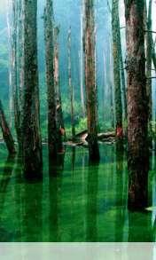 Flooded forest wallpaper for Videocon V1580