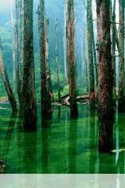 Flooded forest wallpaper for Motorola MOTOSMART Flip