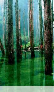 Flooded forest wallpaper for Acer ICONIA TAB A110