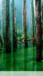 Flooded forest wallpaper for Apple iPhone 5C