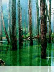 Flooded forest wallpaper for LG Optimus Vu Global