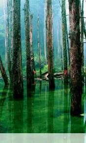 Flooded forest wallpaper for Google Nexus 4