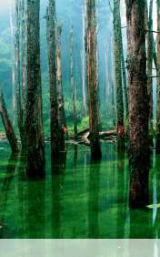 Flooded forest wallpaper for HTC Vertex