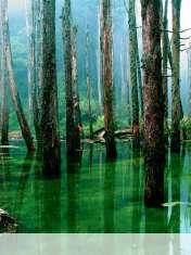 Flooded forest wallpaper for LG Vu 3