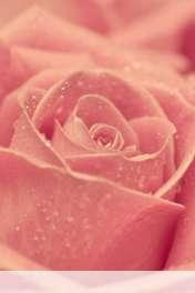 Rose heart wallpaper for Motorola MOTOSMART Flip