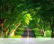 Summer road wallpaper for Yezz Bono 3G