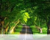 Summer road wallpaper for Verykool i650