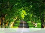 Summer road wallpaper for BlackBerry 9720 Bold