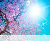 Spring sunshine wallpaper for Yezz Bono 3G