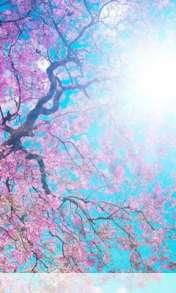 Spring sunshine wallpaper for Amoi F210