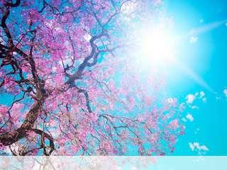 Spring sunshine mobile wallpaper for