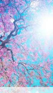 Spring sunshine wallpaper for LG Connect 4G
