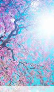 Spring sunshine wallpaper for ZTE Light Tab 2