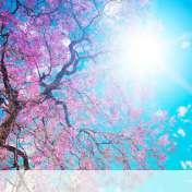 Spring sunshine wallpaper for BlackBerry Classic