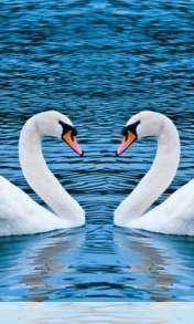 Swans form heart wallpaper for Lemon-Mobiles T39