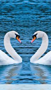 Swans form heart wallpaper for LG Connect 4G